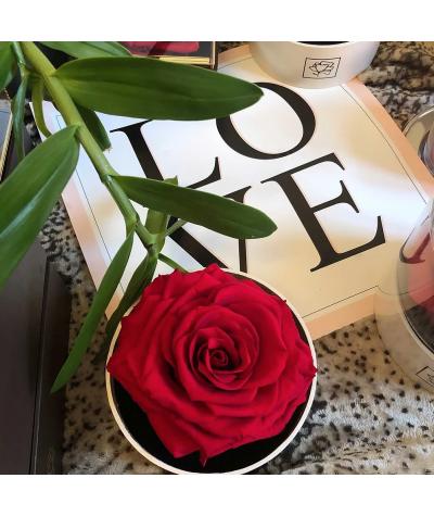 ROSE PRÉSERVÉE - BIRD ROSE - ROUGE - COFFRET ROND